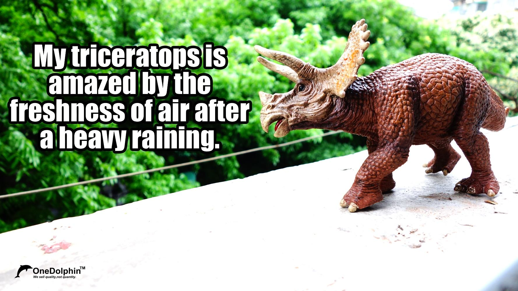 My triceratops is amazed by the freshness of air after a heavy raining.
