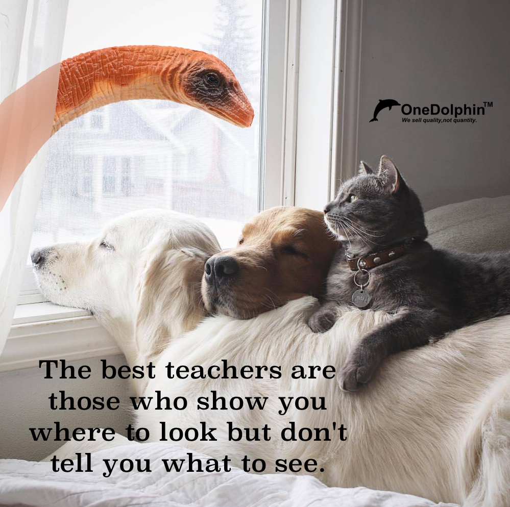 Apatosaurus: the best teachers are those who show you where to look but don't tell you what to see.