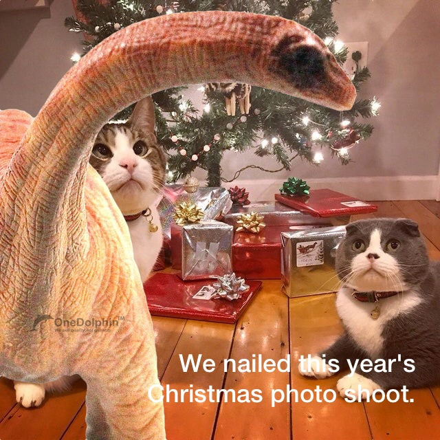 We nailed this year's Christmas photo shoot.